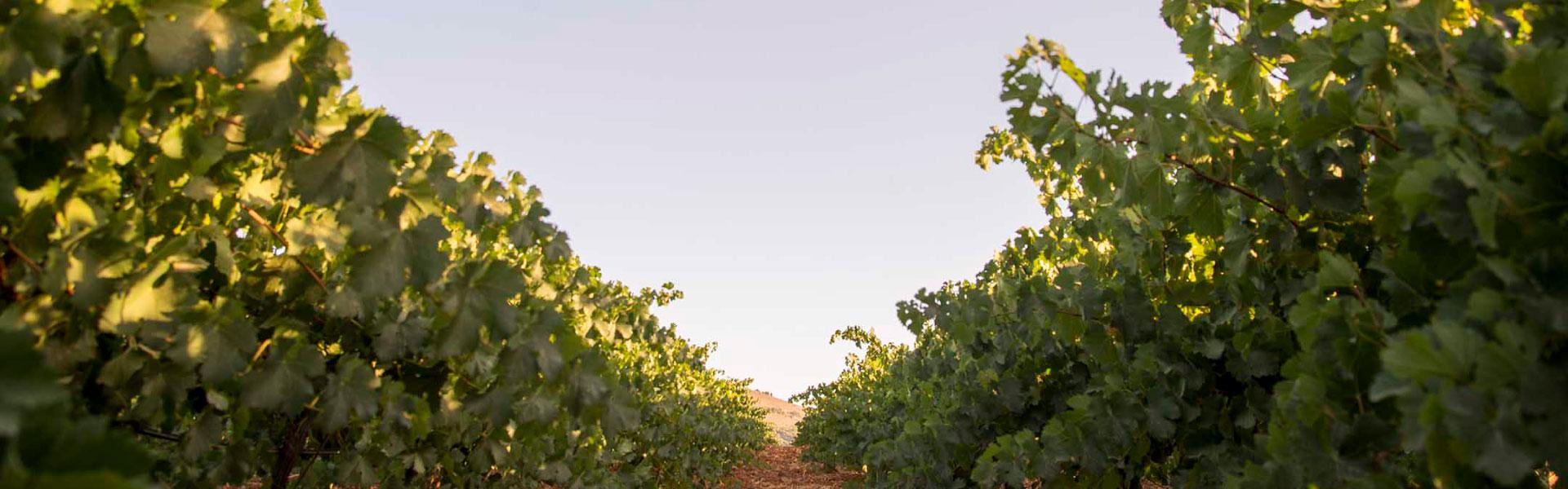 vineros